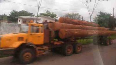 Cameroon Timber Companies