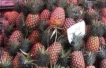 Cameroon Agricultural produce